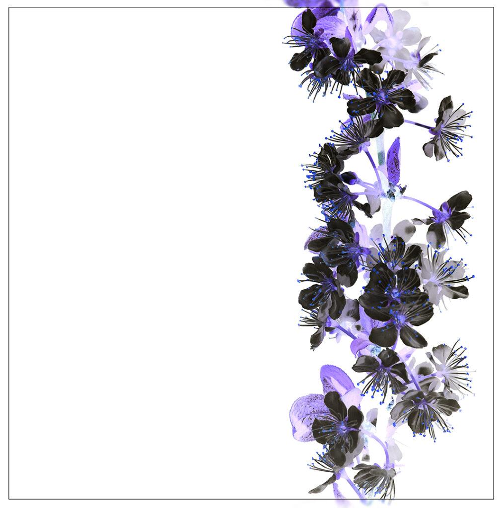 Blossom Invert