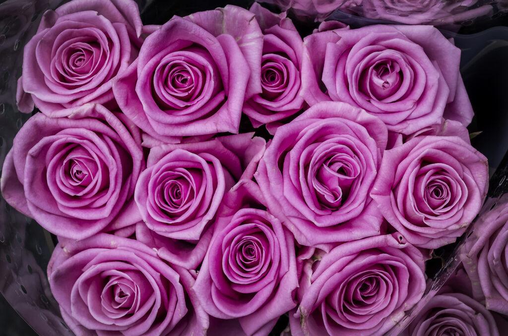 Columbia Road Roses