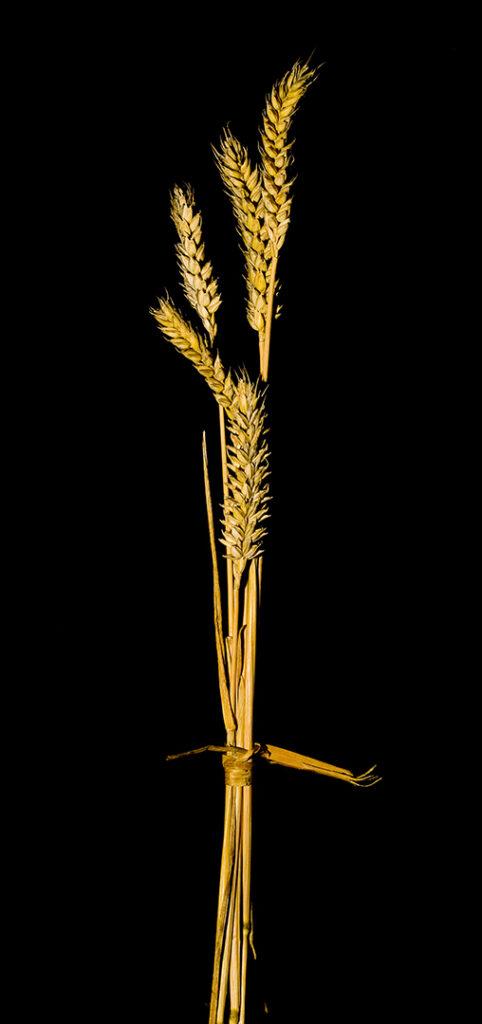 Grain - Golden
