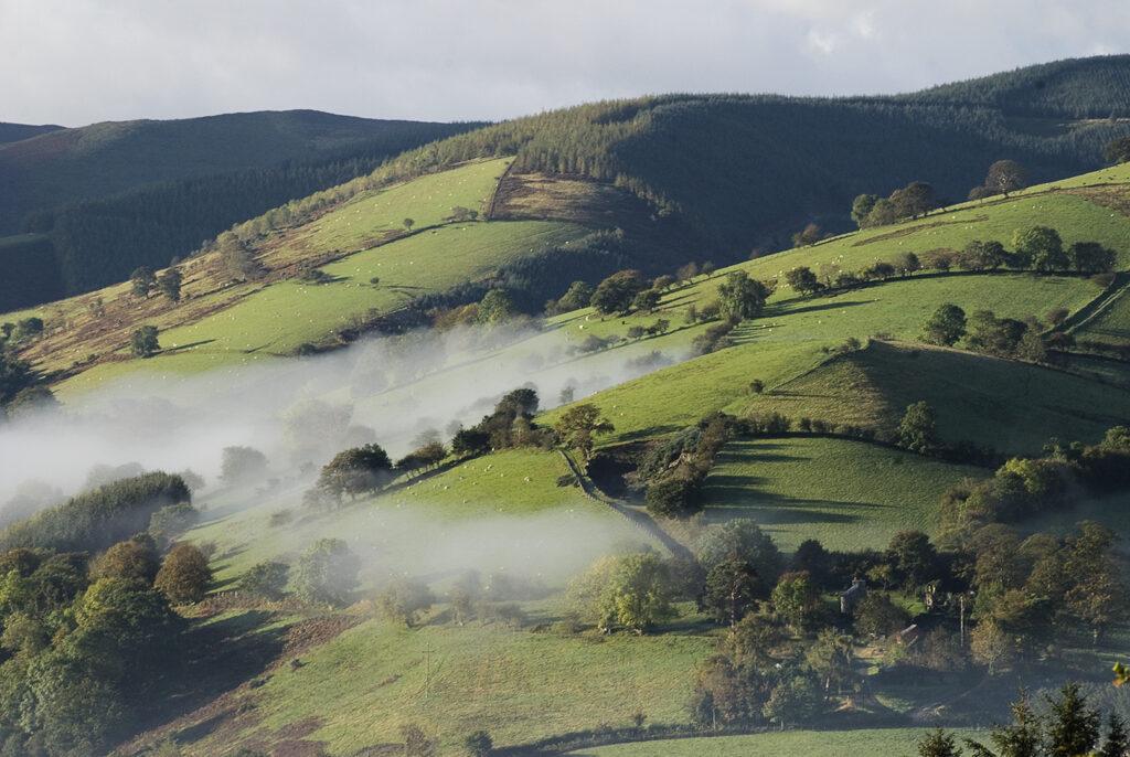 Misty Wales