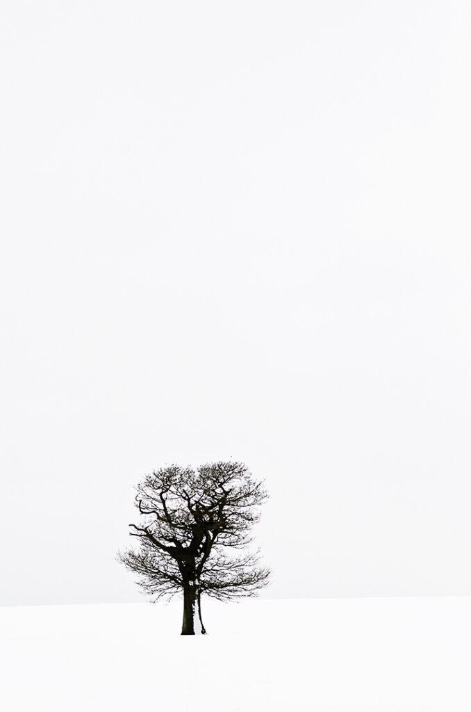 Tony's Tree