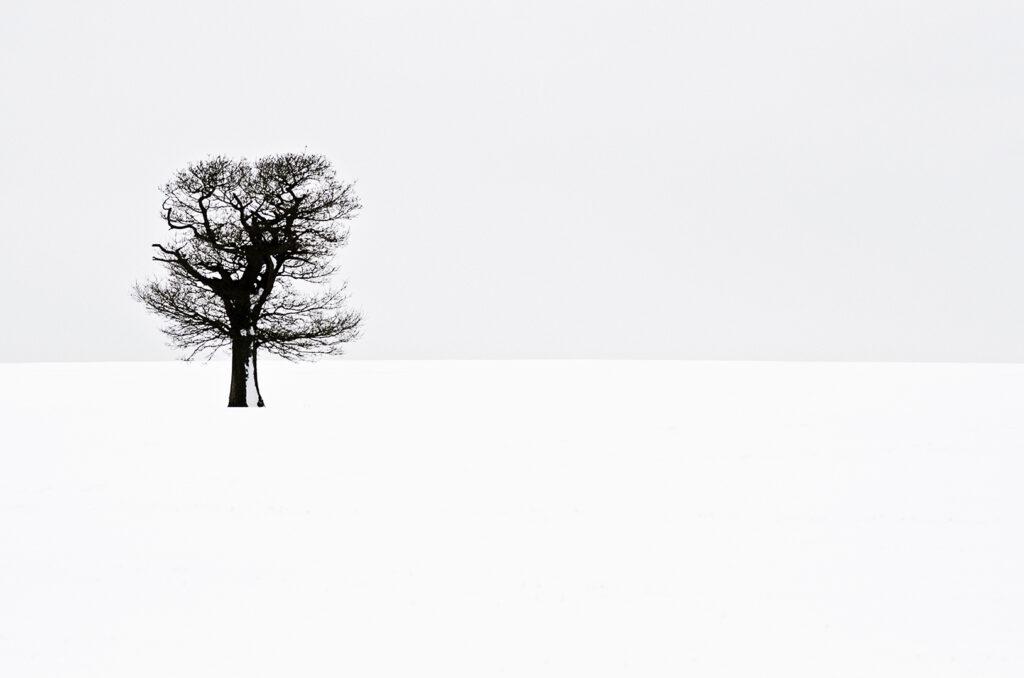 Tony's Tree Landscape